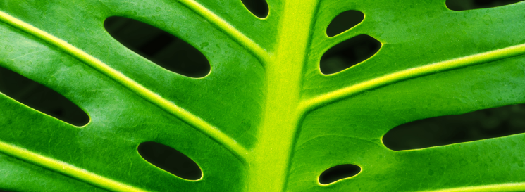 Monstera Leaf Slider