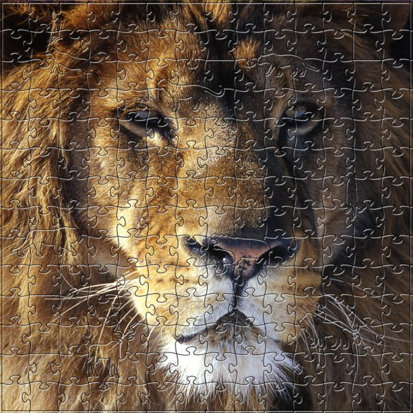 Lion Wooden Jigsaw Puzzle Medium Composite 1000x1000
