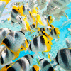 Butterfly Fish Wooden Jigsaw Puzzle 800x800px